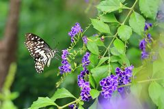 Beautiful Butterfly and flower stock photos