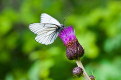 Butterfly on the flower Stock Photography