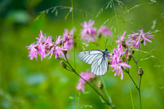 Butterfly on the flower Royalty Free Stock Photos