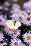 Butterfly on flower close up Royalty Free Stock Photo