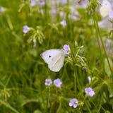 Butterfly on flower closeup Stock Photos