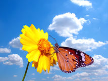 Butterfly on flower with cloudy sky. Back ground Royalty Free Stock Photography