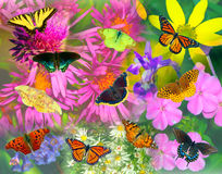 Butterfly and Flower Collage Stock Photography