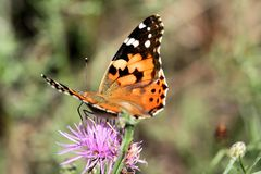 Butterfly and Flower Royalty Free Stock Images