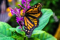 Butterfly on Flower in Colorado stock images