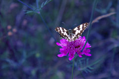 Butterfly on a flower. On a dark blue background Royalty Free Stock Image