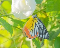 Butterfly on flower in the day. And sun stock images