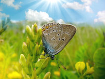 Butterfly on the flower. Detail of nature royalty free stock photography