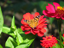 A butterfly  on a flower Stock Photo