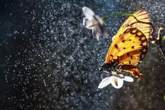 Butterfly on the flower. Droop water royalty free stock image