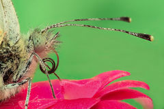 Butterfly on a flower, extreme closeup Stock Images