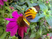 Butterfly on flower with foliage royalty free stock image