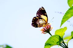 Butterfly on a flower. In a forest in tropical Africa stock photo