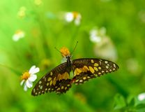 Butterfly on flower in garden. Butterfly on flower in the garden stock photography