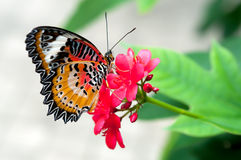 Butterfly in flower garden Stock Image