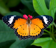 Butterfly in flower garden Stock Images