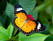 Butterfly in flower garden Royalty Free Stock Images