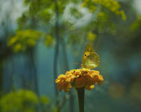 Butterfly on Flower. In a garden Royalty Free Stock Photography