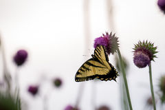 Butterfly on a Flower. In the Garden stock images