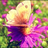 Butterfly flower Stock Photos
