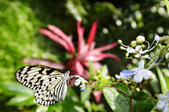 Butterfly and  flower on green background. Stock Photos