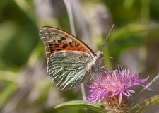 Butterfly on flower. Green background Royalty Free Stock Photo