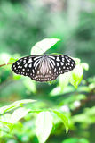 Butterfly on flower green leaf - ecology concept Royalty Free Stock Photo