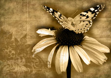 Butterfly on  flower grunge Royalty Free Stock Image