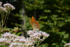 Butterfly on flower. On hiking 2016 Royalty Free Stock Photos