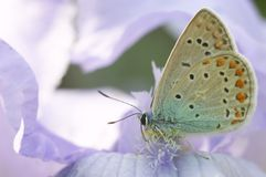 Butterfly on a flower. Macro Royalty Free Stock Image