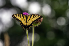 Butterfly on a Flower. Macro of Butterfly on a Flower stock photo