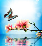 Butterfly and flower magnolia. The composition of the water stock images