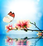Butterfly and flower magnolia. And reflection in water royalty free stock image