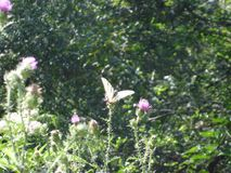 Butterfly on flower in garden royalty free stock photo