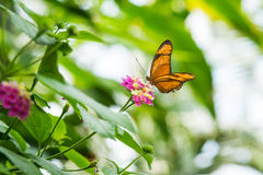 Butterfly on flower. In nature royalty free stock photos