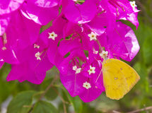 Butterfly with flower Stock Photo