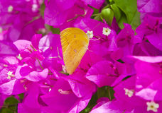 Butterfly with flower Stock Images