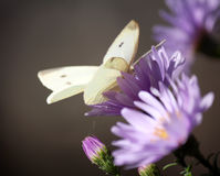 Butterfly on flower nature Stock Photography