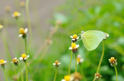 Butterfly and flower in nature Stock Photo