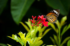 Butterfly and flower. One butterfly and pind flower Stock Photography