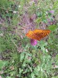 Butterfly on flower. Orange and black butterfly on a purple flower Stock Photography