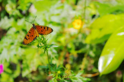 Butterfly on the flower. Orange butterflies in the green plants Royalty Free Stock Image