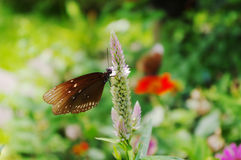 Butterfly on the flower. Orange butterflies in the green plants Stock Photos