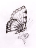 Butterfly with flower. Original hand draw. White background. Royalty Free Stock Photography