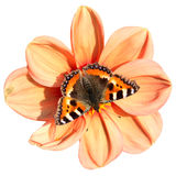 The butterfly on a flower, outline path Stock Photos