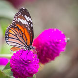 Butterfly on Flower Stock Photos