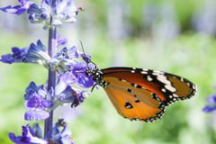 Butterfly on the Flower Royalty Free Stock Image
