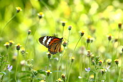 Butterfly and Flower Stock Photos