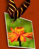 Butterfly on flower photo stock images