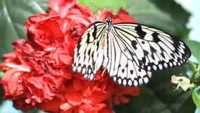 Butterfly on the flower. Butterfly on the red flower stock video footage